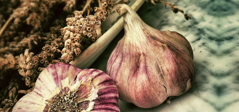 Aged Garlic Extract Modifies Human Immunity